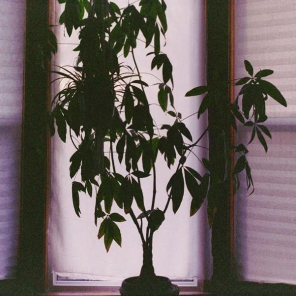 film-plant